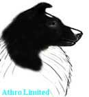 bi-black sheltie, head color is black