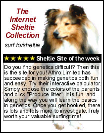 The internet Sheltie collection: Sheltie Site of the Week: Do you find genetics difficult? Then this is the site for you! Athro Limited has succeeded in making genetics both fun and easy. Try their interactive calculator. Simply choose the colors of the parents and click 'Produce litter'. It is fun, and along the way you will learn the basics in genetics. Once you get hooked, there is lots and lots more to investigate. Truly worth your valuable surfingtime!